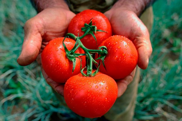 Tomatoes-21