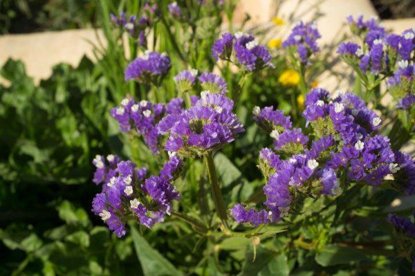 15 цветочных культур, которые нужно посеять на рассаду в апреле ...