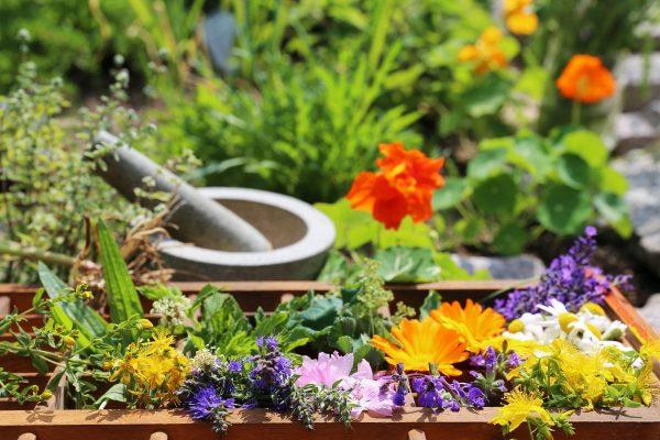 Чайный» цветник — клумба для выращивания пряных и лекарственных ...
