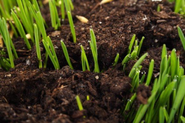 soil-ph-01-640x427-1