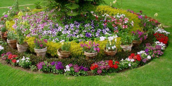 tsvety-v-pristvolnyh-krugah