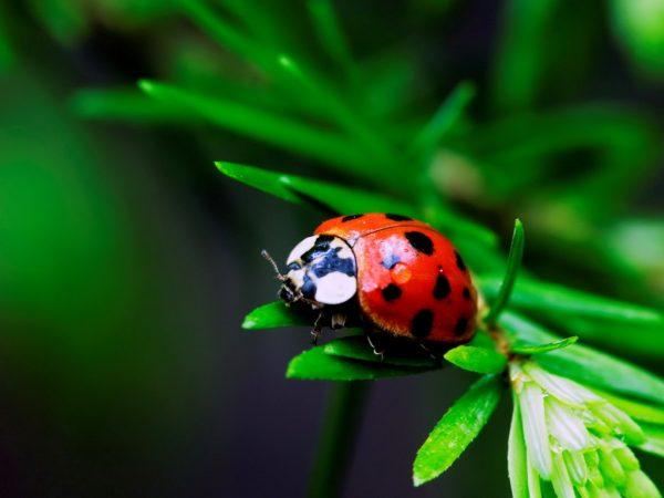 вредные и полезные насекомые сада и огорода фото - Prakard