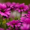 10 интересных фактов о цветах (10 фото) » Интересные факты: самое ...