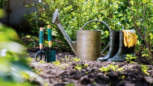 Дистанционный курс по комплексному сезонному уходу за садом ...