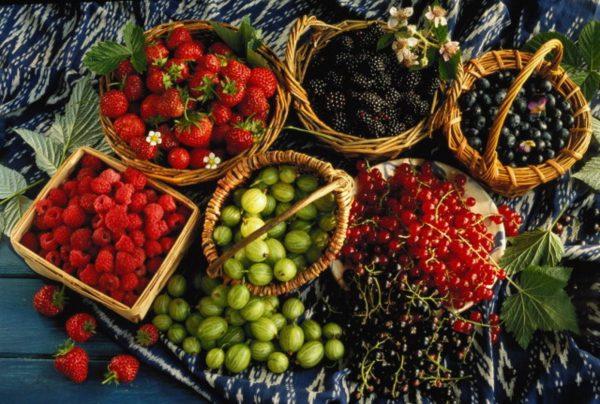Ставропольский край на пятом месте по производству плодово-ягодной ...