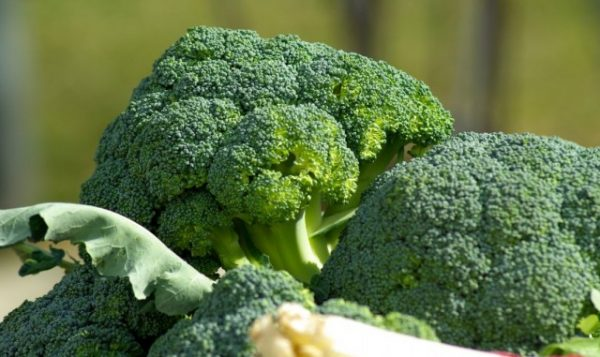 Broccoli-4-640x381-1
