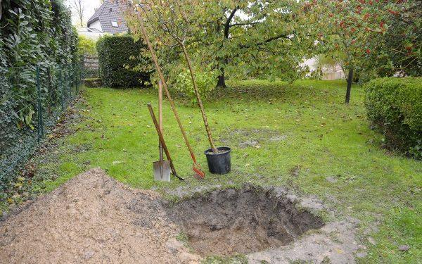 Как правильно сажать плодовые деревья осенью   В саду (Огород.ru)