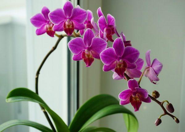 Как заставить орхидею зацвести? 6 полезных советов. Фото ...
