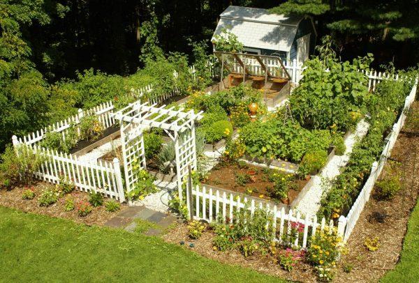 luxury-backyard-vegetable-garden-design-e1495482477330