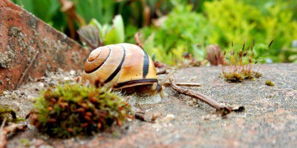 snail_housing_nature_animal_shell_reptile_slimy_macro-601605 jpgd_