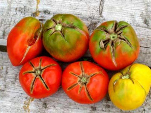 tomaty-11-1200x900-1