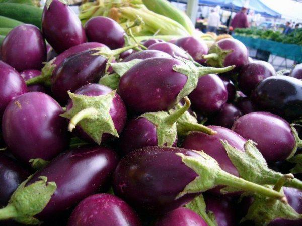 Eggplant_01
