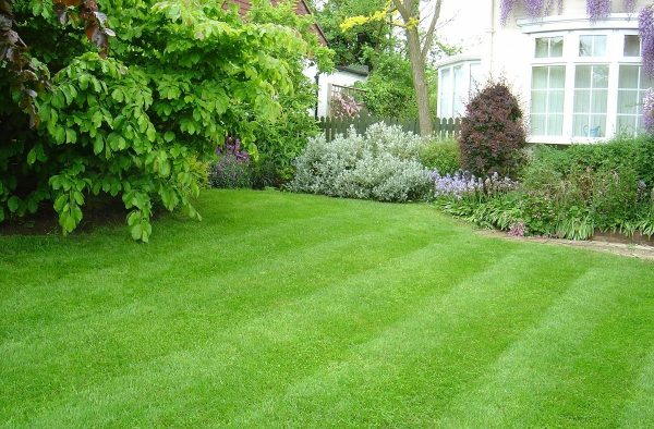 Удобрения для газона: правильный подбор и использование с весны до ...