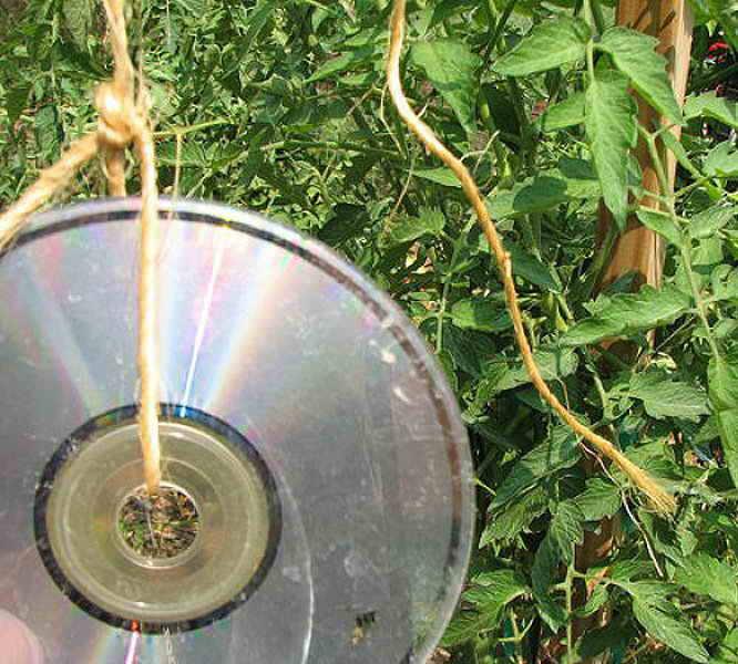 Способы защиты урожая от птиц   Дача - впрок