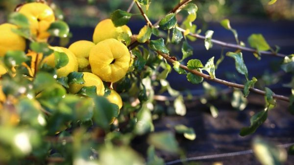 Заметки блоггера: Календарь садовода: фруктовый сад
