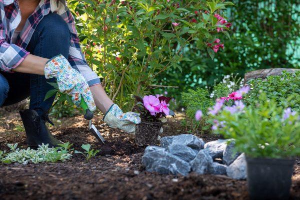 Что не забыть сделать в мае садоводу? Сезонные работы в саду и ...
