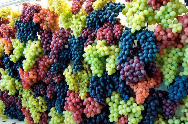 Удобряем виноград весной для шикарного урожая осенью