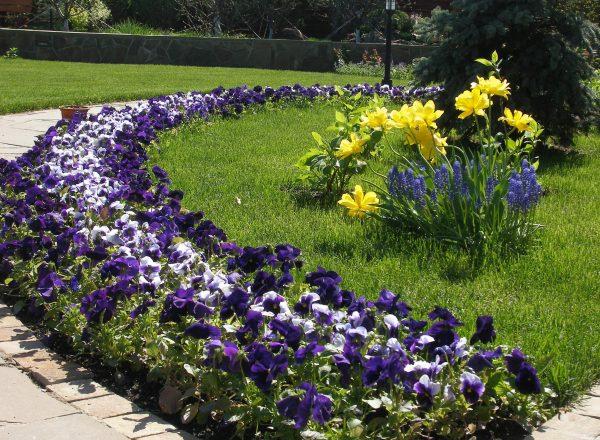 Переливающаяся красота клумбы непрерывного цветения | Возле Дома