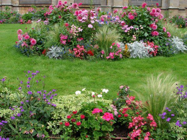 Схемы цветников непрерывного цветения - основные виды и наиболее подходящие  для них растения
