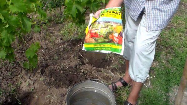 Удобрение винограда, советы и реальный опыт