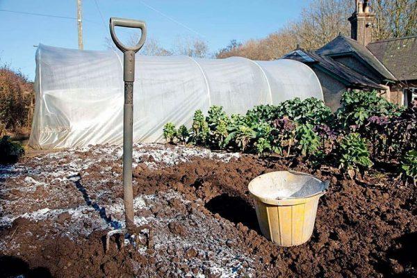 От уровня кислотности грунта зависит будущий урожай