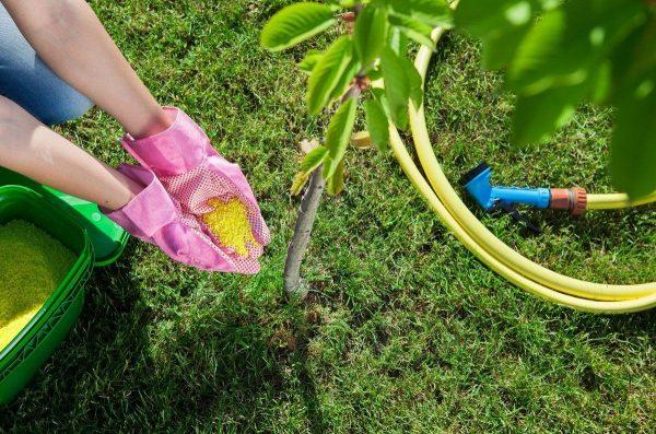 Осенние удобрения – чем подкормить сад, огород и цветник в конце сезона    Дела огородные (Огород.ru)