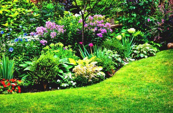 Схемы клумб непрерывного цветения: существующие схемы, перечень растений,  создание клумбы своими руками