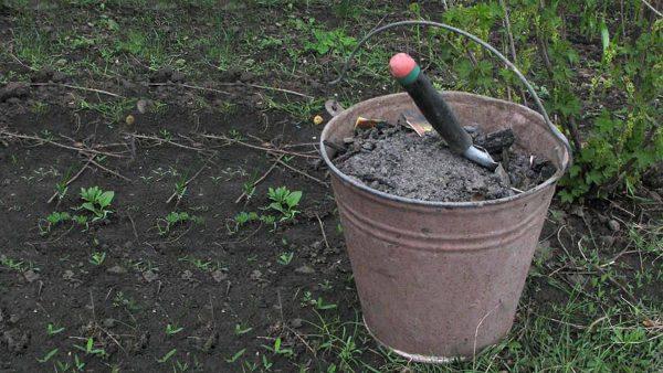 Какие удобрения вносить осенью, что лучше для почвы