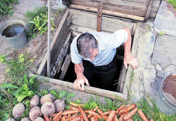 Как подготовить погреб для хранения урожая овощей и фруктов: пошаговая  инструкция