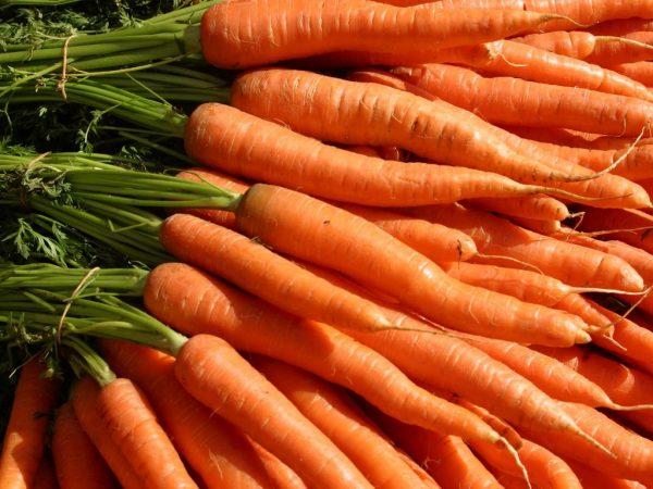 Морковка семена лучшие сорта: посадка и уход