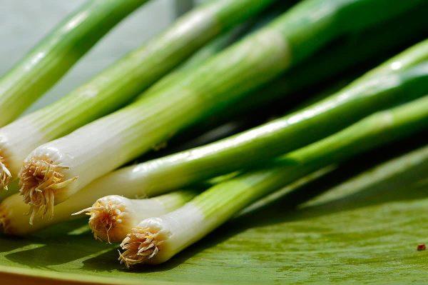 Подкармливаем зеленый лук: какие удобрения применить для хорошего урожая