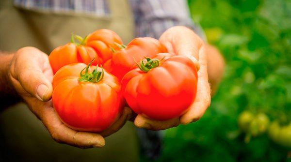 Как сохранить в банке свежею помидору. Как сохранить томаты свежими надолго