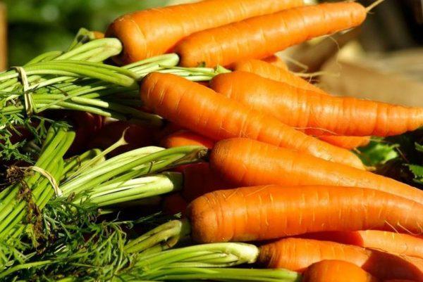 Как собирать и хранить морковь – мыть или не мыть — AgroXXI