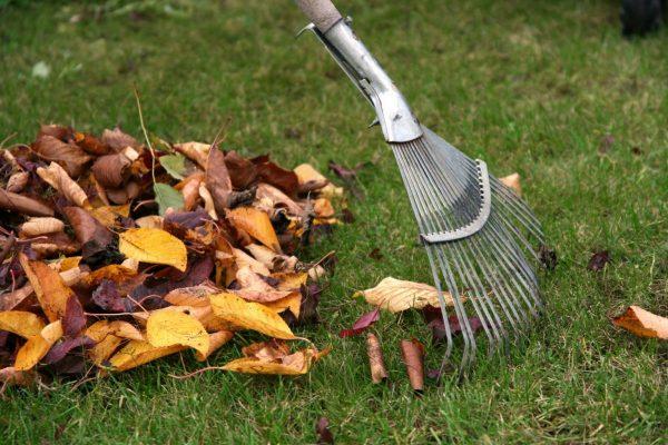 Надоело убирать опавшие листья? Мы расскажем как найти им полезное  применение!