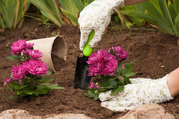 Как высаживать осенью цветы | Газета Я