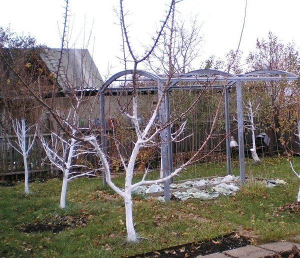 Подготовка сада к зиме: какие работы выполнить осенью | В саду (Огород.ru)