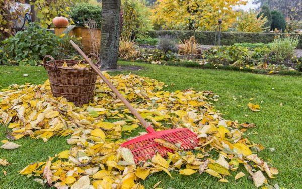 Нужно ли убирать из сада опавшие осенью листья?   Дела огородные (Огород.ru)
