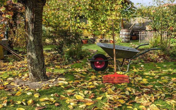 10 идей, что делать с опавшими осенью листьями   Дела огородные (Огород.ru)