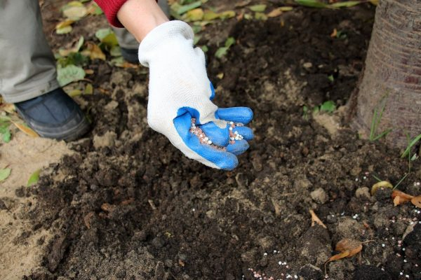 Как подготовить сад к зиме? 8 самых важных дел. Фото — Ботаничка.ru