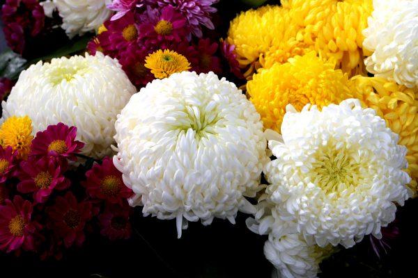 Какие цветы и кустарники можно сажать осенью — посадка многолетников