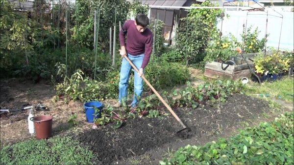 Посев сидератов. Осенняя обработка почвы - YouTube