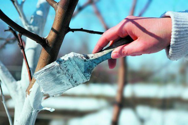 Обработка сада осенью, подготовка сада к зиме, осенняя обработка плодовых  деревьев