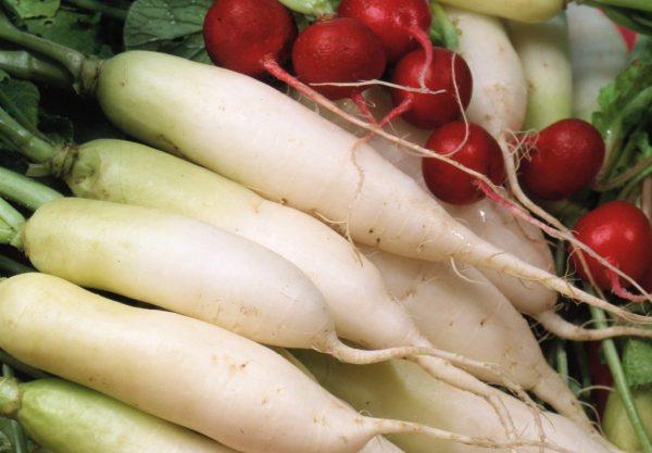 Редька — какая бывает и как выращивать. Разновидности и сорта, особенности  выращивания и хранения. Фото — Ботаничка.ru