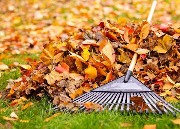 ЭкоИнструкция: Как бороться с уборкой листвы во дворе - Recycle