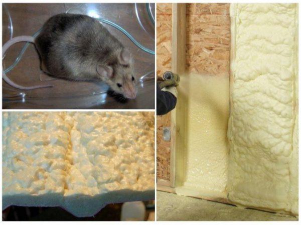 Грызут ли мыши монтажную пену и как от них защититься